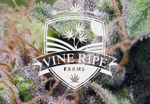Vine Ripe Farms - Medical Marijuana