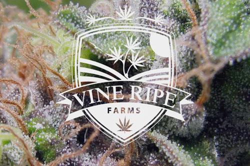 Vine Ripe Farms - Medical Marijuana